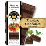 Planting Chocolate | Cherry Tomatoes