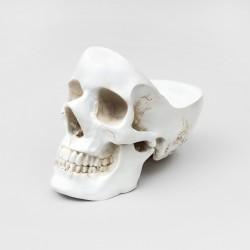 Skull Organiser | WHITE